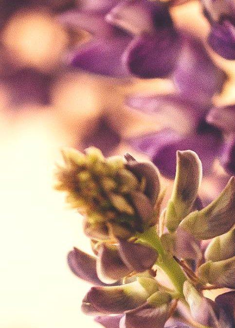 Kampo Medicine – Φαρμακευτικά Φυτά στην Ιαπωνική Θεραπευτική